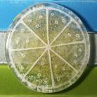 Ceramika i szkło cytryna,podstawek,prezent,design