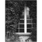 Ilustracje, rysunki, fotografia okno,liście,architektura,szamoto