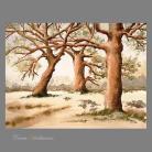 Ilustracje, rysunki, fotografia pejzaż,drzewo,prezent,obraz,wnętrze,na ścianę,
